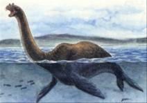 Nessie (Maugeri d'après Heuvelmans)