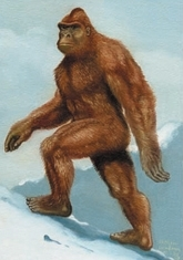 Sasquatch (illustration Ph. Coudray)