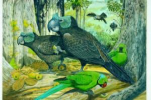 mauritius-1-raven-parrots-jphume