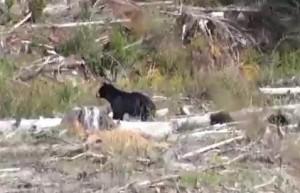 maman ours et petits 2 (recadré)