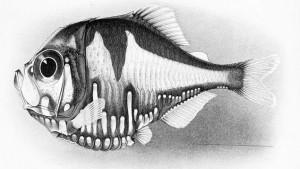 Polyipnus en 1905